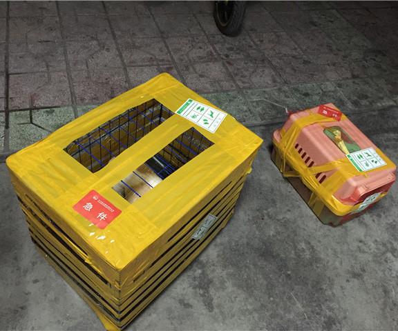 小动物运输价格