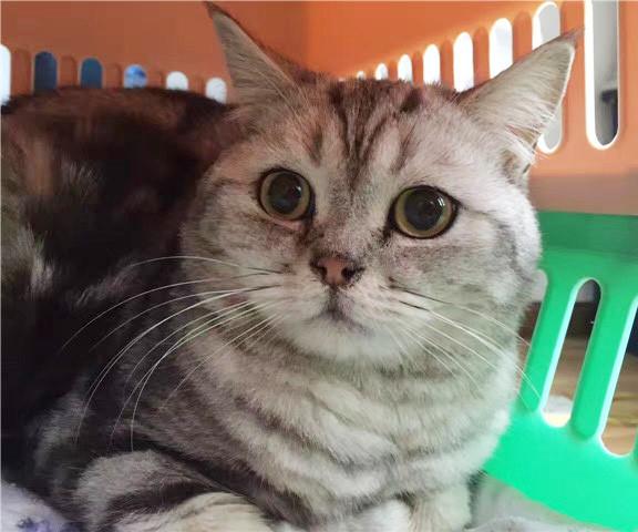 小猫托运多少钱