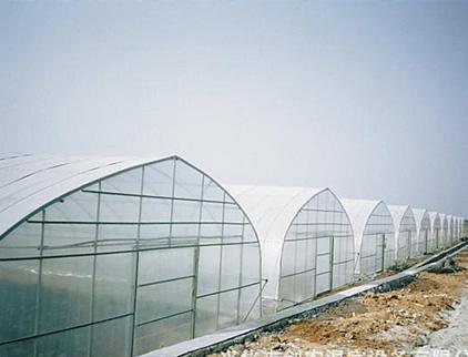 山东日光温室