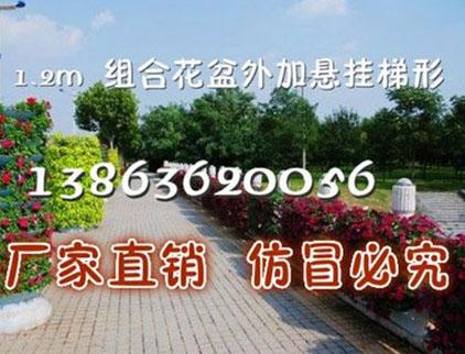 山东花树设计