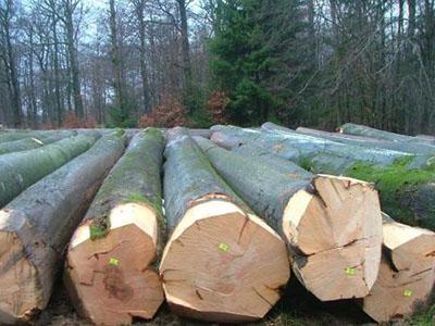 德国榉木材料