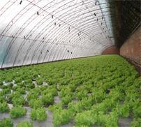 蔬菜大棚配件厂家