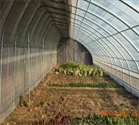 蔬菜大棚管生产