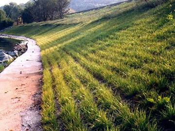植草砼生态护坡哪家好