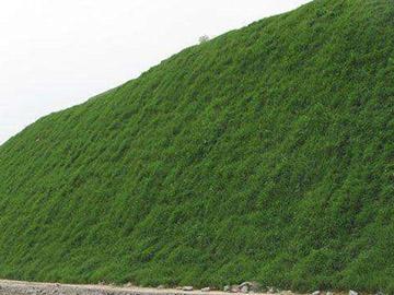 植草砼生态护坡