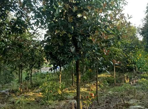 苗木供应商
