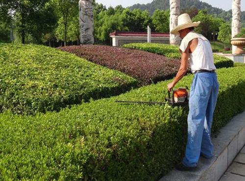贵州园林养护