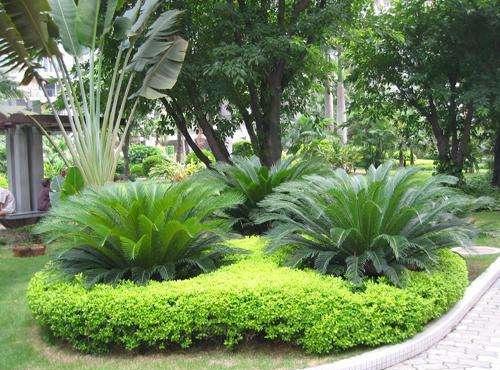 bwin客户端园林绿化种植