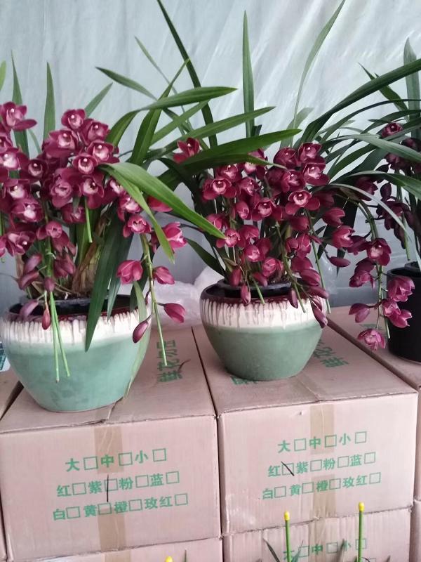 贵州绿植租摆
