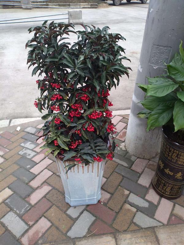 观山湖绿植盆栽