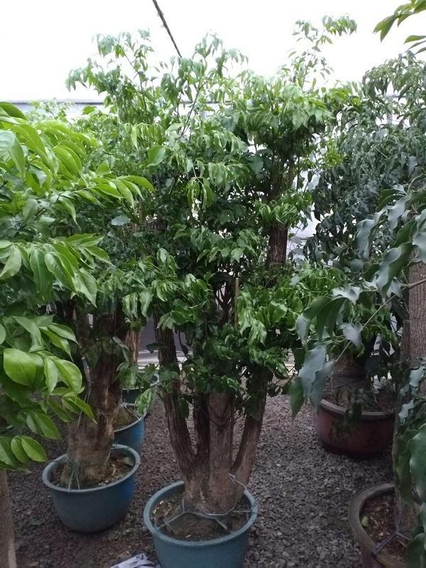 花果园绿植盆栽