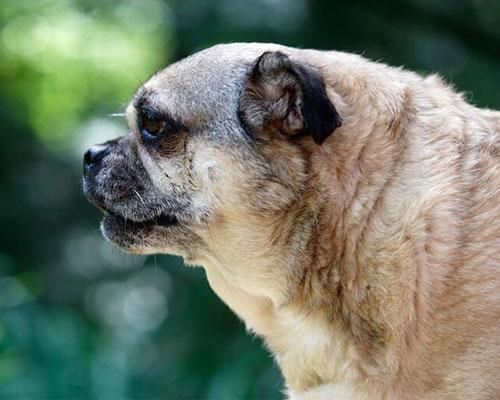 老年犬健康筛查