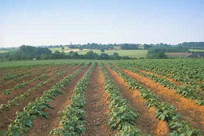 土壤营养理化凯发国际网址