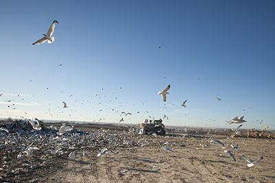 农用地土壤污染凯发国际网址