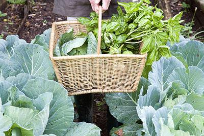 农产品常规理化凯发国际网址