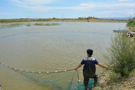 渔业养殖水凯发国际网址