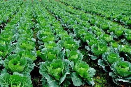 农产品质量安全