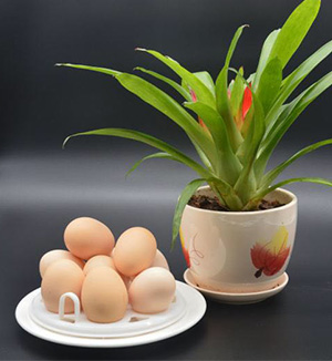 出售土鸡蛋