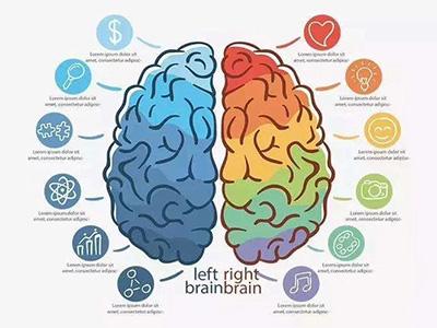 右脑开发靠谱吗