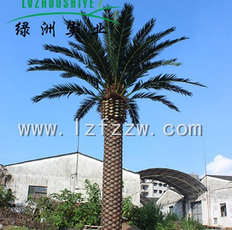 海藻树厂家