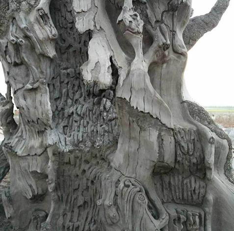 水泥树批发