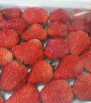 东港草莓哪家好