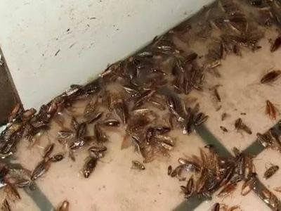 石家庄灭蟑螂
