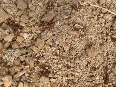 石家莊滅螞蟻