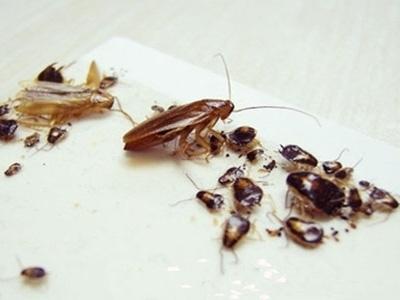石家庄上门灭蟑螂