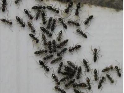 家庭灭蟑螂公司