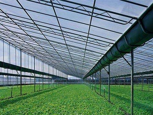 连栋蔬菜温室大棚