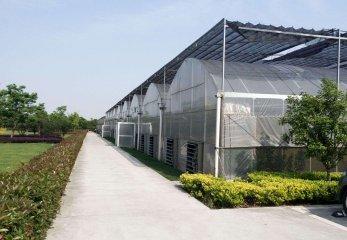 连栋温室大棚建设