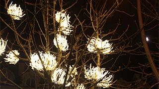 上海嘉定远香湖项目-创意景观灯