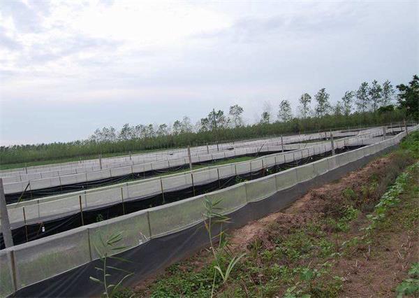 黑斑蛙养殖基地
