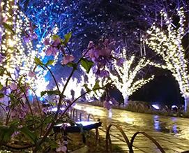 【图文】江西景观照明的经验_打造江西景观照明的要点