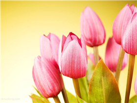 花卉航空货运