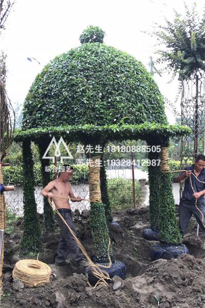 植物造型设计