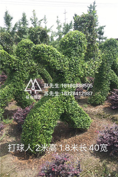 植物修剪造型