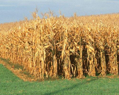 玉米秸秆压块