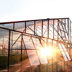 沈阳玻璃大棚