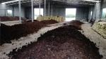 花卉肥料厂家