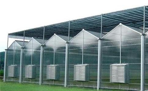 连栋温室工程