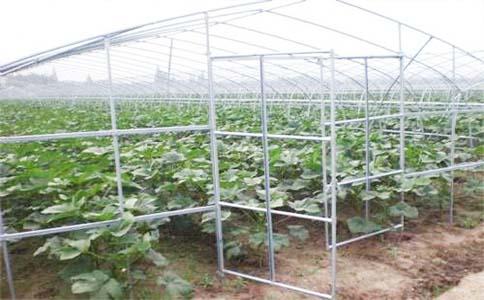 异型玻璃温室工程