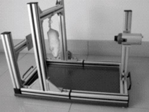 悬尾测试仪