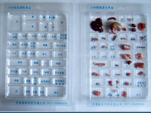 小动物脏器收集盘