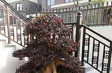 別墅庭院綠植