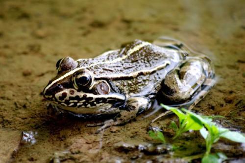 南昌青蛙养殖