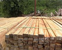 广州建筑木方
