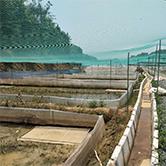 江西青蛙养殖场