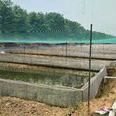 九江青蛙养殖基地